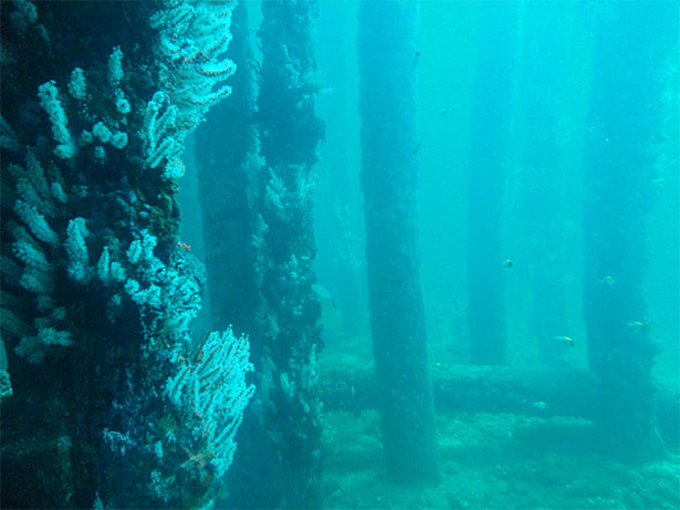 The Mysterious Underwater Forest Of Alabama
